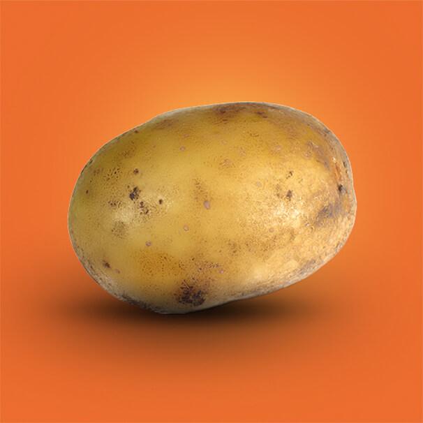 Potato Message - Potato Transit